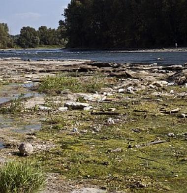 Titre : Eutrophisation de l'eau et déchets flottants sur la Garonne en étiage estival en aval de Gagnac-sur-Garonne en Haute-Garonne